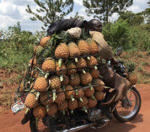Ananas Uganda